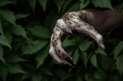 Horror and Halloween theme: terrible dirty hand with black fingernails zombie crawls out of green leaves, walking dead apocalypse Stock Image
