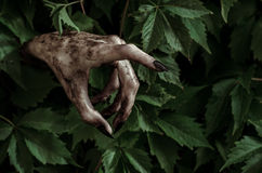 Horror and Halloween theme: terrible dirty hand with black fingernails zombie crawls out of green leaves, walking dead apocalypse Stock Photos
