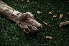 Horror and Halloween theme: Terrible zombie hands dirty with black nails lie on the green grass, the walking dead apocalypse, top. View studio Royalty Free Stock Photo