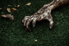 Horror and Halloween theme: Terrible zombie hands dirty with black nails lie on the green grass, the walking dead apocalypse, top Royalty Free Stock Photo