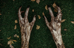Horror and Halloween theme: Terrible zombie hands dirty with black nails lie on the green grass, the walking dead apocalypse, top Stock Photo