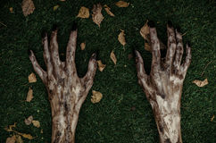 Horror and Halloween theme: Terrible zombie hands dirty with black nails lie on the green grass, the walking dead apocalypse, top Royalty Free Stock Photos