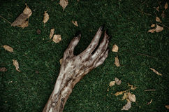 Horror and Halloween theme: Terrible zombie hands dirty with black nails lie on the green grass, the walking dead apocalypse, top. View studio stock photography