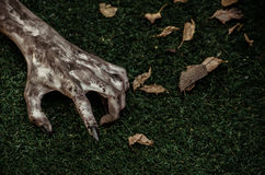 Horror and Halloween theme: Terrible zombie hands dirty with black nails lie on the green grass, the walking dead apocalypse, top Stock Photos