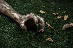 Horror and Halloween theme: Terrible zombie hands dirty with black nails lie on the green grass, the walking dead apocalypse, top Royalty Free Stock Image