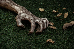 Horror and Halloween theme: Terrible zombie hands dirty with black nails lie on the green grass, the walking dead apocalypse, top Stock Image