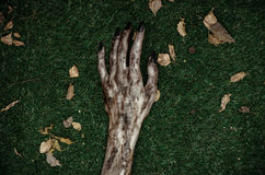 Horror and Halloween theme: Terrible zombie hands dirty with black nails lie on the green grass, the walking dead apocalypse, top Royalty Free Stock Images