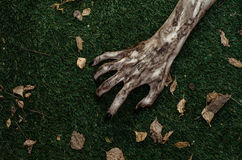 Horror and Halloween theme: Terrible zombie hands dirty with black nails lie on the green grass, the walking dead apocalypse, top Stock Images