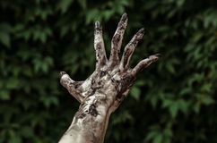 Horror and Halloween theme: Terrible zombie hands dirty with black nails reaches for green leaves, walking dead apocalypse, first- Stock Photography