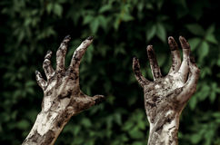 Horror and Halloween theme: Terrible zombie hands dirty with black nails reaches for green leaves, walking dead apocalypse, first- Royalty Free Stock Image
