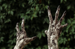 Horror and Halloween theme: Terrible zombie hands dirty with black nails reaches for green leaves, walking dead apocalypse, first- Royalty Free Stock Images