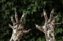 Horror and Halloween theme: Terrible zombie hands dirty with black nails reaches for green leaves, walking dead apocalypse, first-. Person view studio Stock Photos