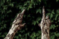 Horror and Halloween theme: Terrible zombie hands dirty with black nails reaches for green leaves, walking dead apocalypse, first- Royalty Free Stock Photography