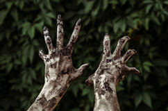 Horror and Halloween theme: Terrible zombie hands dirty with black nails reaches for green leaves, walking dead apocalypse, first- Royalty Free Stock Photos