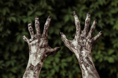 Horror and Halloween theme: Terrible zombie hands dirty with black nails reaches for green leaves, walking dead apocalypse, first- Royalty Free Stock Photo