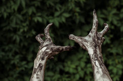 Horror and Halloween theme: Terrible zombie hands dirty with black nails reaches for green leaves, walking dead apocalypse, first- Stock Image