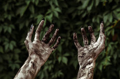 Horror and Halloween theme: Terrible zombie hands dirty with black nails reaches for green leaves, walking dead apocalypse, first- Stock Photos