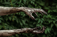 Horror and Halloween theme: Terrible zombie hands dirty with black nails reaches for green leaves, walking dead apocalypse Royalty Free Stock Images