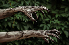 Horror and Halloween theme: Terrible zombie hands dirty with black nails reaches for green leaves, walking dead apocalypse Stock Image