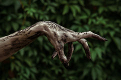 Horror and Halloween theme: Terrible zombie hands dirty with black nails reaches for green leaves, walking dead apocalypse. Studio Royalty Free Stock Images