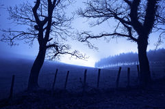 Horror landscape at night with creepy trees Royalty Free Stock Images