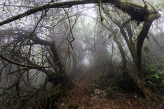 Horror path in forest Royalty Free Stock Photo
