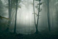 Horror pond in dark fairy tale forest Stock Photos