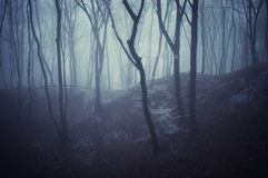 Horror scene of a dark forest with blach trees. A horror scene of a dark forest with blach trees and blue fog Stock Photo