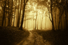 Horror scene with a road through golden forest  Royalty Free Stock Photo