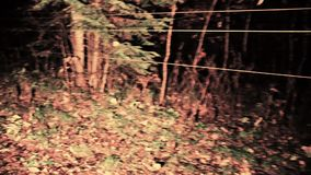 Horror scene of a scary forest Color grade