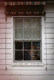Horror Scene of a Scary Monster. Peeking out of a small window royalty free stock photos