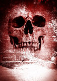 Horror Skull Royalty Free Stock Image