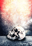 Horror Skull Royalty Free Stock Images