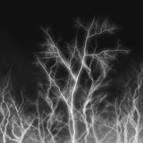 Horror trees glowing in the darkness. Horror background of trees glowing in the darkness Stock Photos