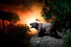 Angry bear behind the fire cloudy sky. The silhouette of a bear in foggy forest dark background stock images