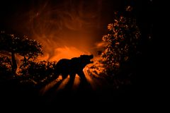 Angry bear behind the fire cloudy sky. The silhouette of a bear in foggy forest dark background royalty free stock image