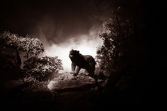Angry bear behind the fire cloudy sky. The silhouette of a bear in foggy forest dark background royalty free stock photography