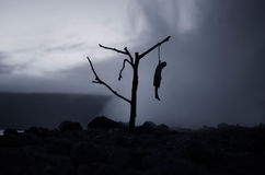 Horror view of hanged girl on tree at evening (at night) Suicide decoration. Death punishment executions or suicide abstract idea. Different background Royalty Free Stock Photos