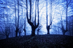 Horrorwald nachts Lizenzfreie Stockfotos