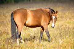 2014 hors Photographie stock
