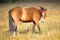 2014 hors Fotografia Stock