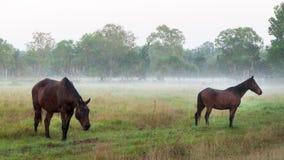 Hors du brouillard Photographie stock libre de droits