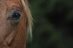 Hors eye Stock Photo