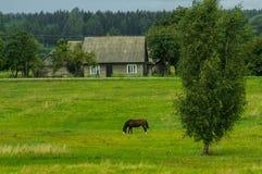 Hors i fältet Fotografering för Bildbyråer