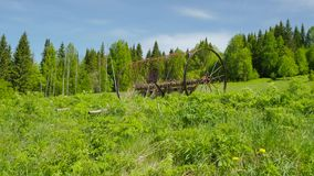 Horse's rake at meadow stock footage
