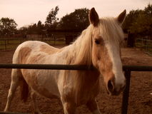 HorseÂs Porträt Lizenzfreie Stockbilder