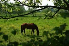 Horse royalty free stock photos