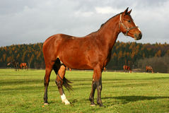 Horse 10 Stock Images