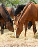 Horse. S of  English breed in shelter on  farm in solar, summer day Stock Images