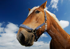 Free Horse Royalty Free Stock Images - 1025899